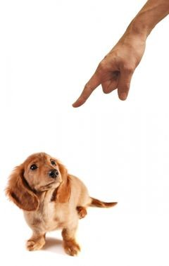 scolding dog