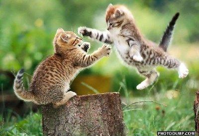flying cat fight